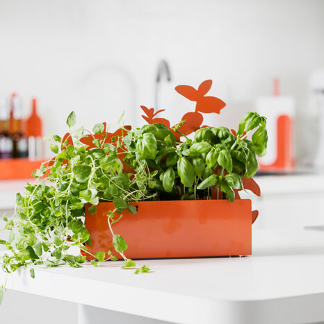 Form - herb stand
